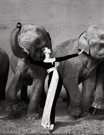 dovima-with-elephants-1955