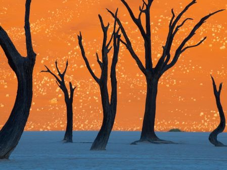 camel-thorn-trees-namibia_larger