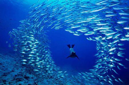 david-doubilet-galapagos-sea-lion