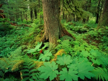 david-muench-kadasham-rain-forest-in-tongass-national-forest