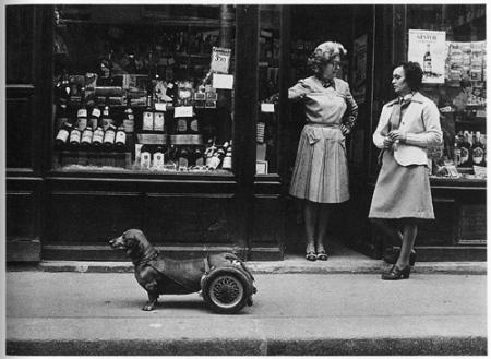 Doisneau dog on wheels