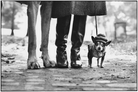 elliott erwitt dogs larger