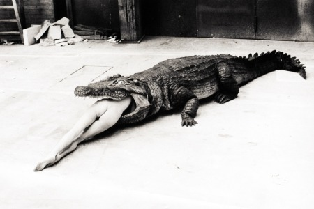 helmut newton crocodile larger