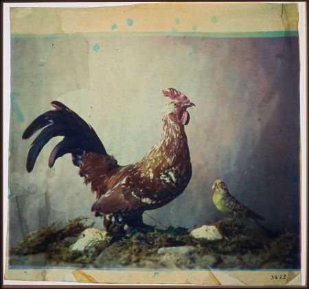 Louis_Ducos_du_Hauron_-_Still_life_with_rooster