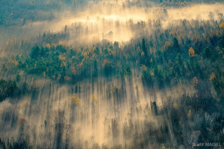 maine_forest_mist_Meisel