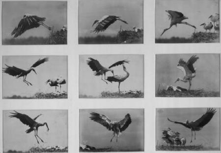 storks anschutz