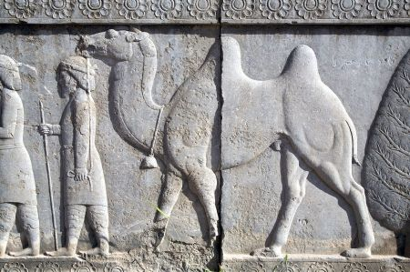 Persepolis_relief_with_camel