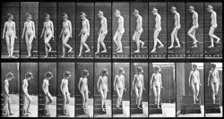 muybridge nude descending a staircase