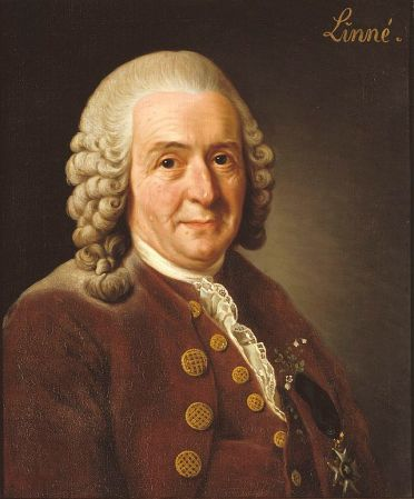 A 1775 portrait of Carl Linnaeus by Alexander Roslin. It is now in Gripsholm Castle in Sweden.