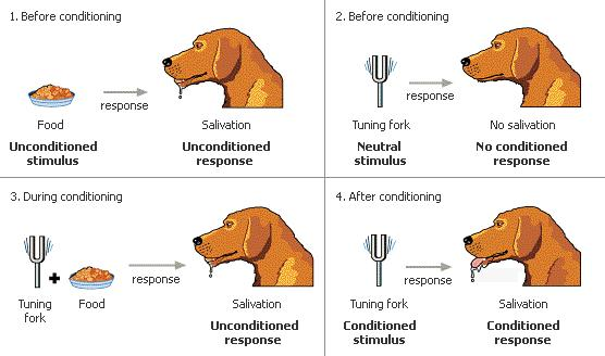 A diagram showing how classical conditioning works.