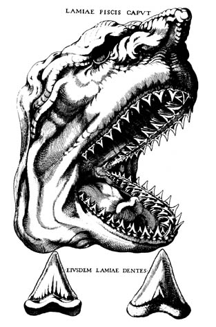 In a 1667 book, Nicholas Steno compared the head of a contemporary shark with fossil shark's teeth.