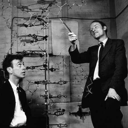 James Watson (b. 1928) (left) and Francis Crick (1916-2004) with a model of the DNA molecule.