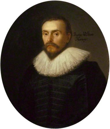 A portrait of William Harvey (1578-1657).