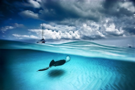 southern stingray and sailboat
