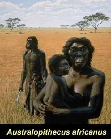 An artist's imagining of Australopithecus africanus.
