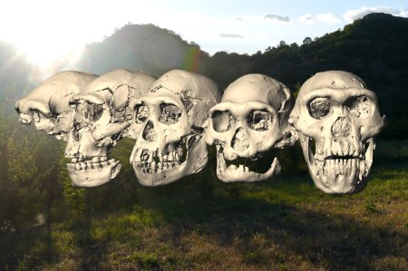 Computer-reconstructed images of five hominid skulls from Dmanis, showing wide variation.