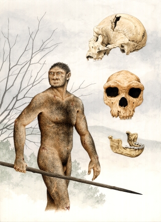 An artist's depiction of Homo heidelbergensis.