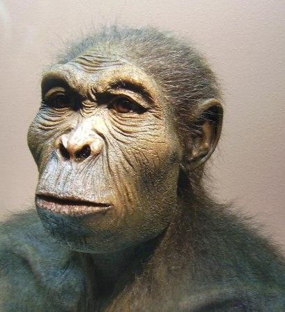 An artist's reconstruction of Homo habilis.