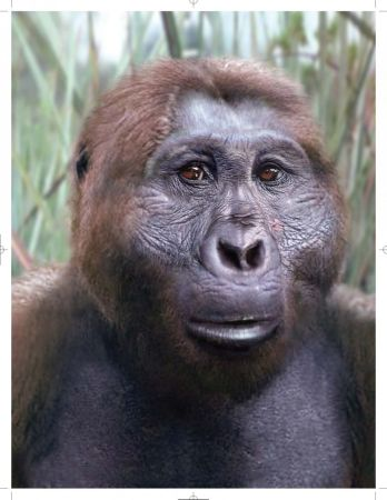 An artist's reconstruction of Paranthropus aethiopicus.