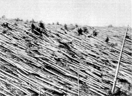 A forest destroyed by the Tunguska meteor.