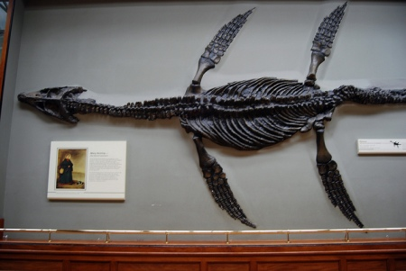 The fossil plesiosaur discovered by Mary Anning is on display in the Natural History Museum in London, UK.