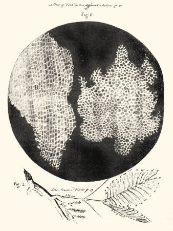 An illustration from Robert Hooke's Micrographia, showing 'cells' in cork.