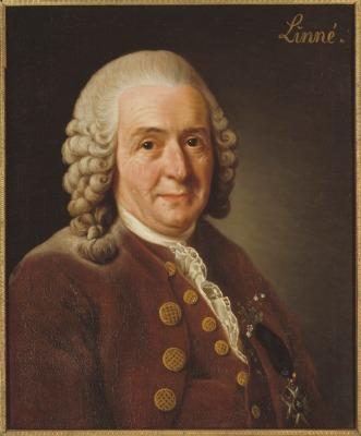 Roslin Alexander:Carl von Linné, 1707-1778. Grh 1053